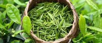 Все о зеленом чае, свойства, применение, правила приготовления