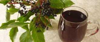 Чай с бузиной: польза черной ягоды