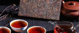 Чай Пуэр: полезные свойства и противопоказания напитка