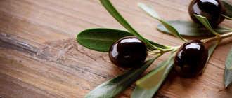 Чай из листьево оливкого дерева
